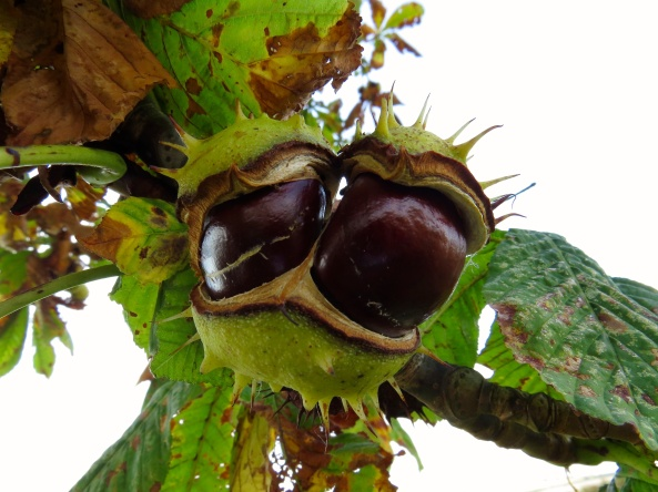 """Why does it always happen to me? said Carl Conker!"