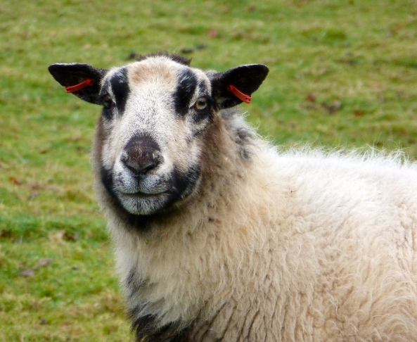 """I express myself through my choice of earrings..I don't like to follow the herd!"" said Eunice Ewe!"