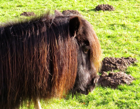 Pete the Pony was so bored that he could do nothing but stare into his fringe!