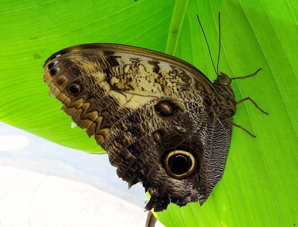 It's Bobby Brown Owl Butterfly…with thoughts of Spring...