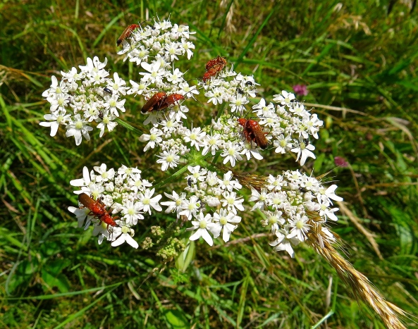 In the Soldier Beetle world they hold mass weddings!