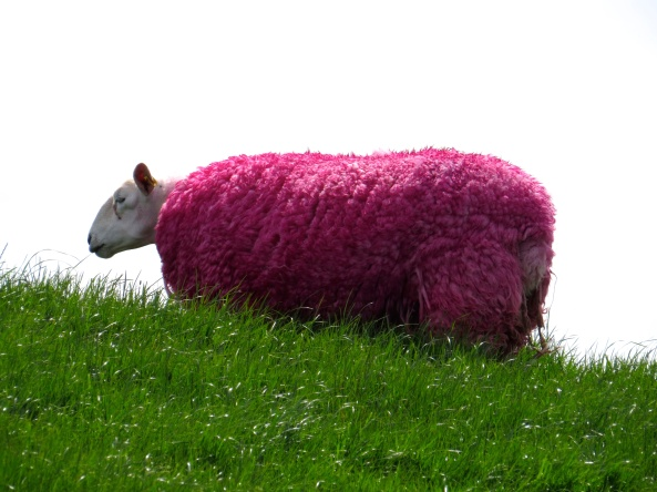 Sheila Sheep stared aimlessly into the distance thinking of days gone by when she could hold her head up high, safe in the knowledge that she looked like the rest of the herd! How she regretted that last visit to the salon!