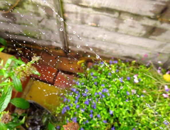 Sputnik Spider thought that the drops of rain, whilst quite pretty, were a blooming' pain in the neck!