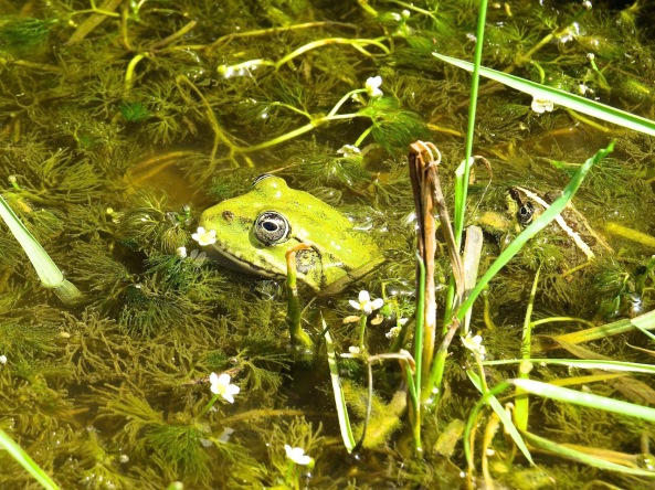 What a pretty frog!