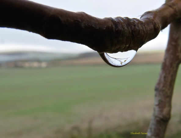 This raindrop just has a few branches caught in it!