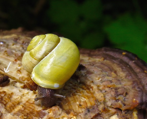 """Could you not,"" said Sven Snail in an exasperated voice, ""Could you not have edited out the poo?"""