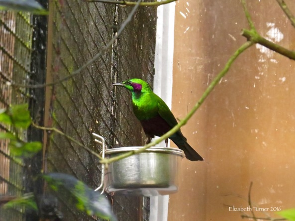 Captive ( :( ) Emerald Starling